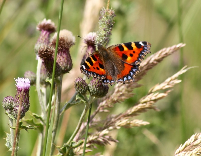 Sighting >> Butterfly Conservation - Lancashire Branch - Sighting Image